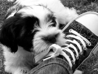 5 técnicas para educar a tu cachorro y no muerda