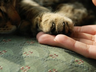 Cuidados indispensables para un gato