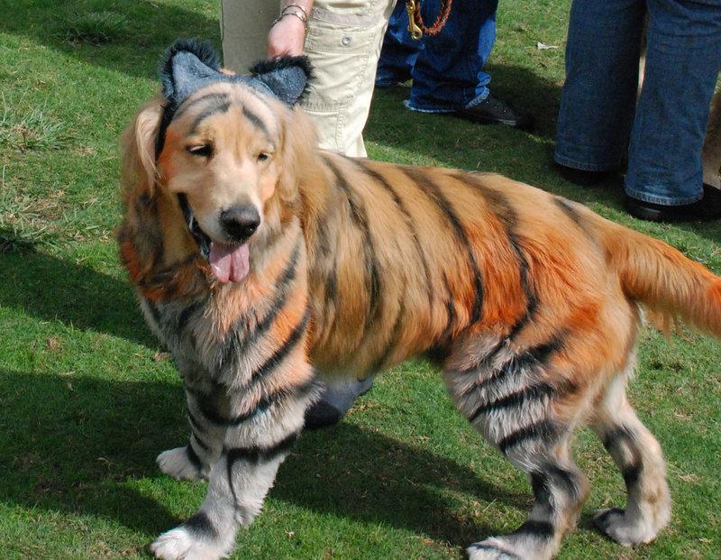 ¿Se escapo el tigre?