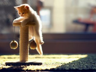 15 datos curiosos sobre los gatos que te sorprenderán