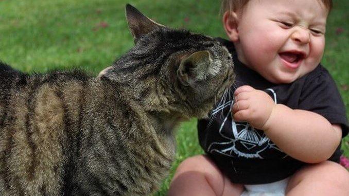 Qué sucede con el gato cuando llega un bebe a casa
