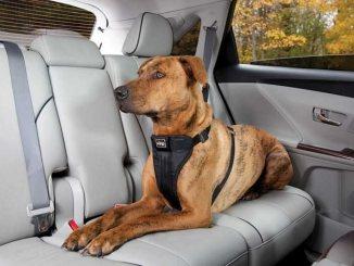 Consejos para que las mascotas viajen seguras en el auto