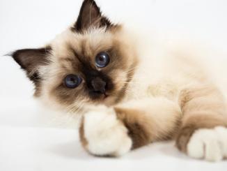Listado de nombres para gatos