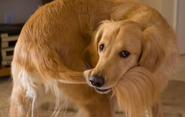 ¿ Por qué algunos perros se muerden la cola ?