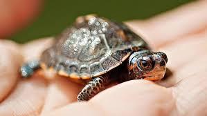Listado de Nombres para Tortugas
