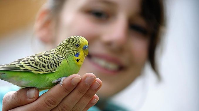 Las Aves Tienen Sentimientos