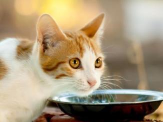 Sabías que la leche vacuna es perjudicial para la salud del gato