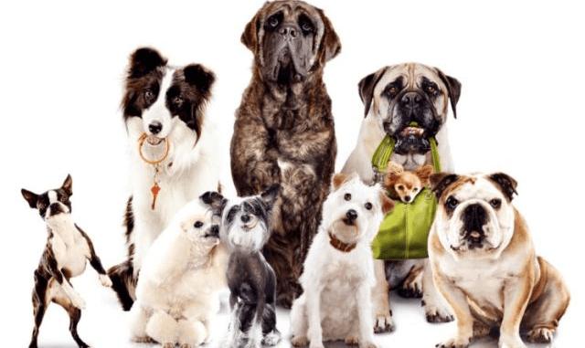 Mejor perro según la edad del dueño