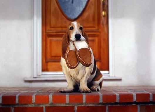 Cómo Enseñar a tu Perro a Traer las Zapatillas