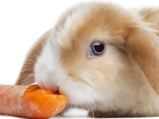 Errores más Comunes en la Alimentación de un Conejo