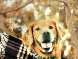 Las Cinco enfermedades más típicas de los perros en invierno
