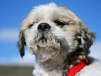 Cómo prevenir a nuestra mascota de la rabia