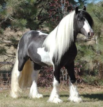 Clasificación de los caballos de acuerdo a su porte