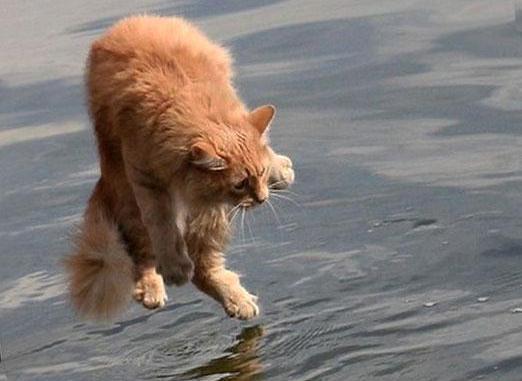Por qué los gatos tienen miedo al agua