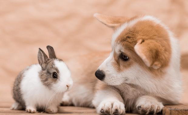 Pueden los Perros y los Conejos Vivir Juntos