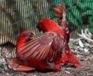 lori-cardenal-2