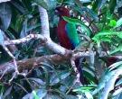 Papagayo-Granate-(6)