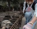 china-dogs4