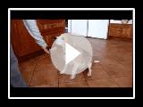 Was ein Beagle für Lebensmittel tun wird