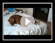 Meine verrückte Boxer Hund