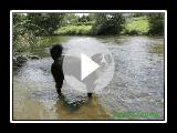 Appenzeller sennenhund- Jack ist Schwimmen