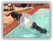 Entlebucher Pool Party