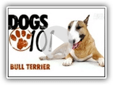 Chiens 101- Bull Terrier