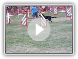 U'TOON Berger de Beauce manche 4 jumping cat C