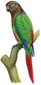Sinu Parrot