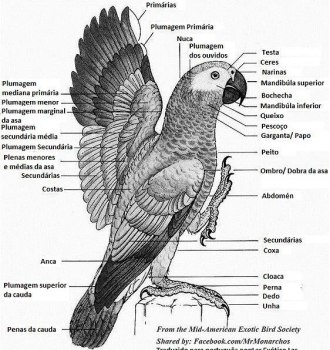 Anatomia-papagaios-pt