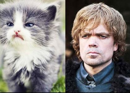 cat-of-thrones-9