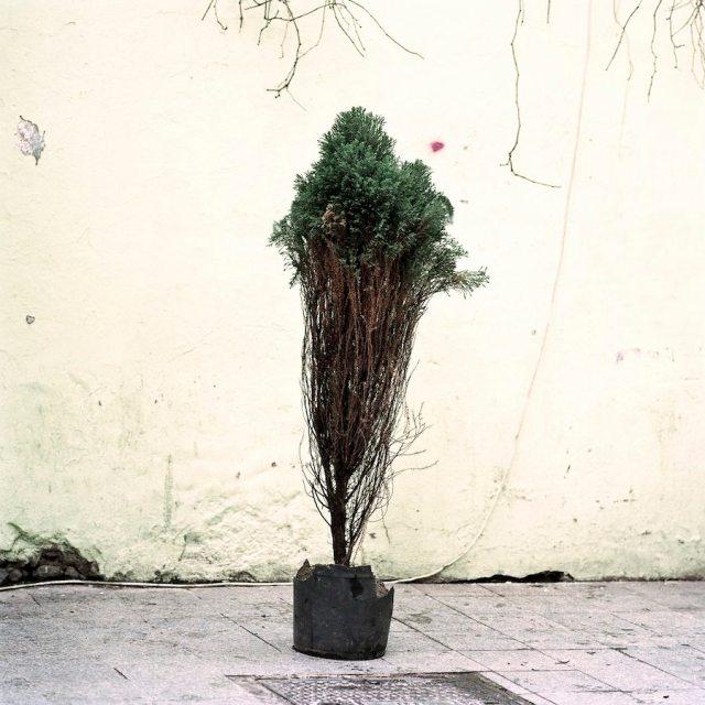 Ali Taptik - Flora - Rampa - 3