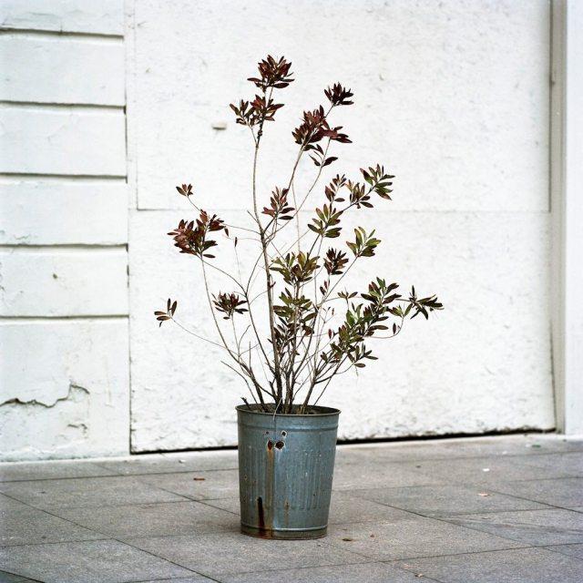 Ali Taptik - Flora - Rampa - 10