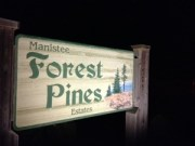 manistee forest pines