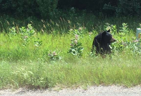 Bear spotted on Stiles Road north of Johnson Road.