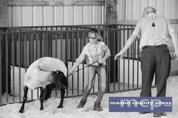 Lucy Shoup shows her sheep in the ring during the 2016 fair.