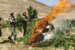 مكافحة المخدرات بالتنسيق مع القوات المسلحة