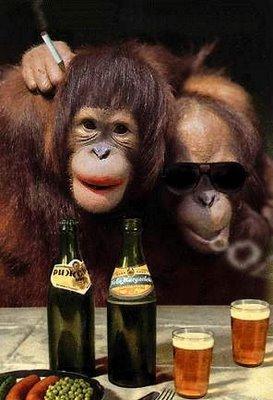 جلسات علاج لشمبانزي بسبب ادمان التدخين والكحول