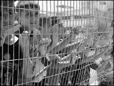 ارتفاع ضحايا اسطول الحرية الى 19 قتيل و تركيا تسحب سفيرها في تل ابيب