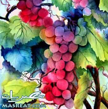 كروم العنب في تشيلي