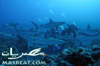 وزير السياحة يقرر اغلاق شواطئ شرم الشيخ بعد ازمة اسماك القرش
