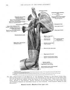 An Atlas of Human Anatomy, Carl Toldt, MD 1904