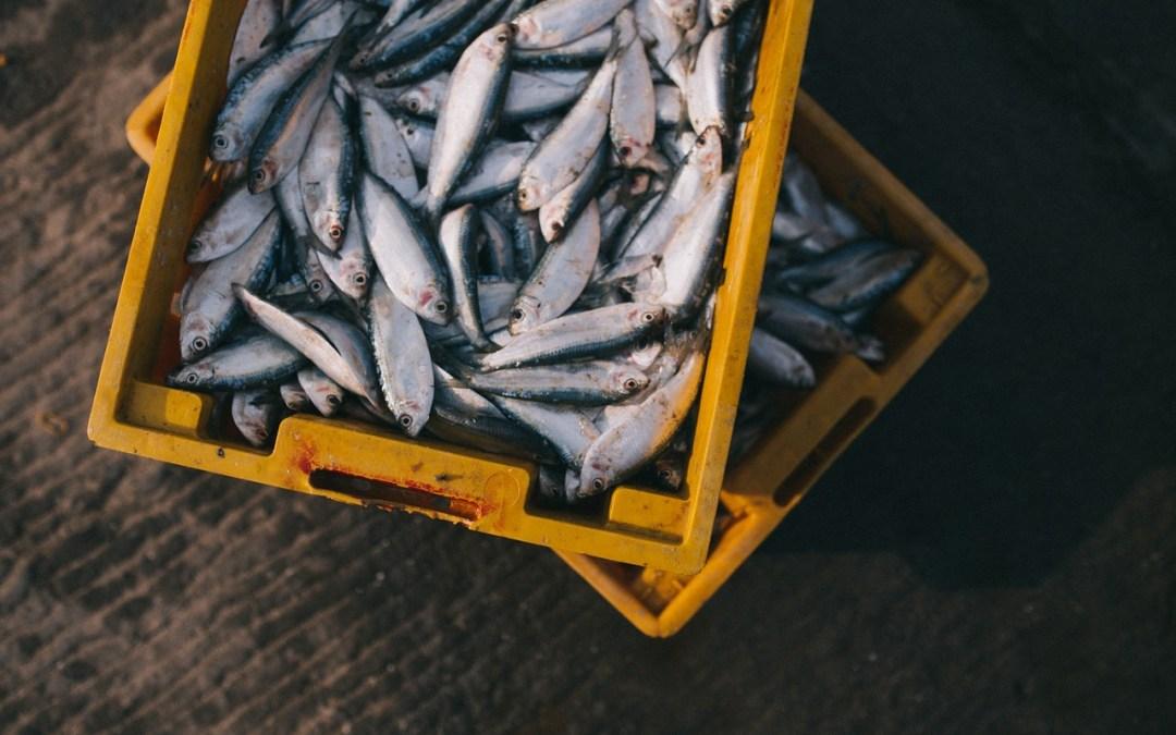 Consumo de Pescados y Mariscos