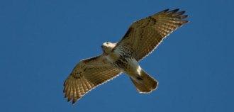 Mass Audubon S Birds Of Prey Grafton Public Library