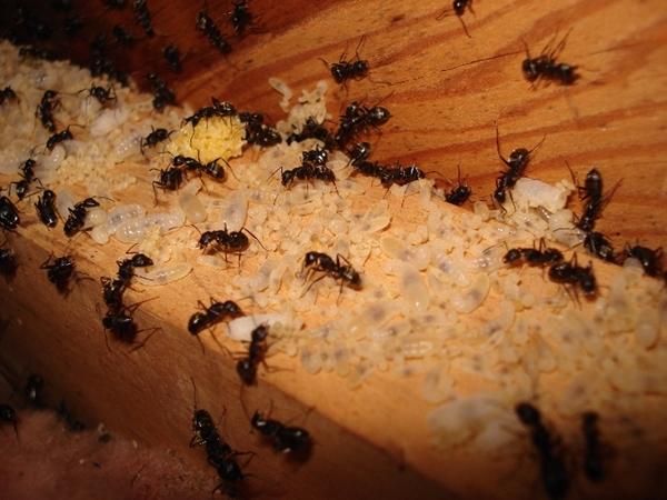 Ant And Termite Damage Comparison