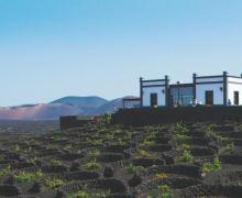 Los vinos de Lanzarote siguen triunfando en el exterior