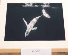 """La fotografía """"Silencio"""" de Ángel María Pérez Grimaldi ganadora de la X Edición del Certamen Crea Joven de San Bartolomé"""
