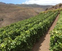 El Gobierno de Canarias convoca 6,8 millones correspondientes a las ayudas del POSEI estatal de 2011