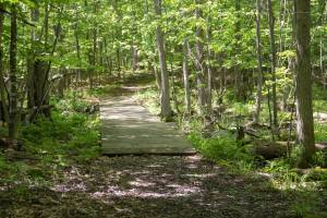 Massena Nature Center Hiking Trails