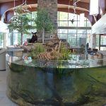 The Nature Center - Massena, NY 13662